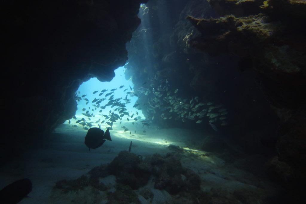 cayos cochinos tours swim